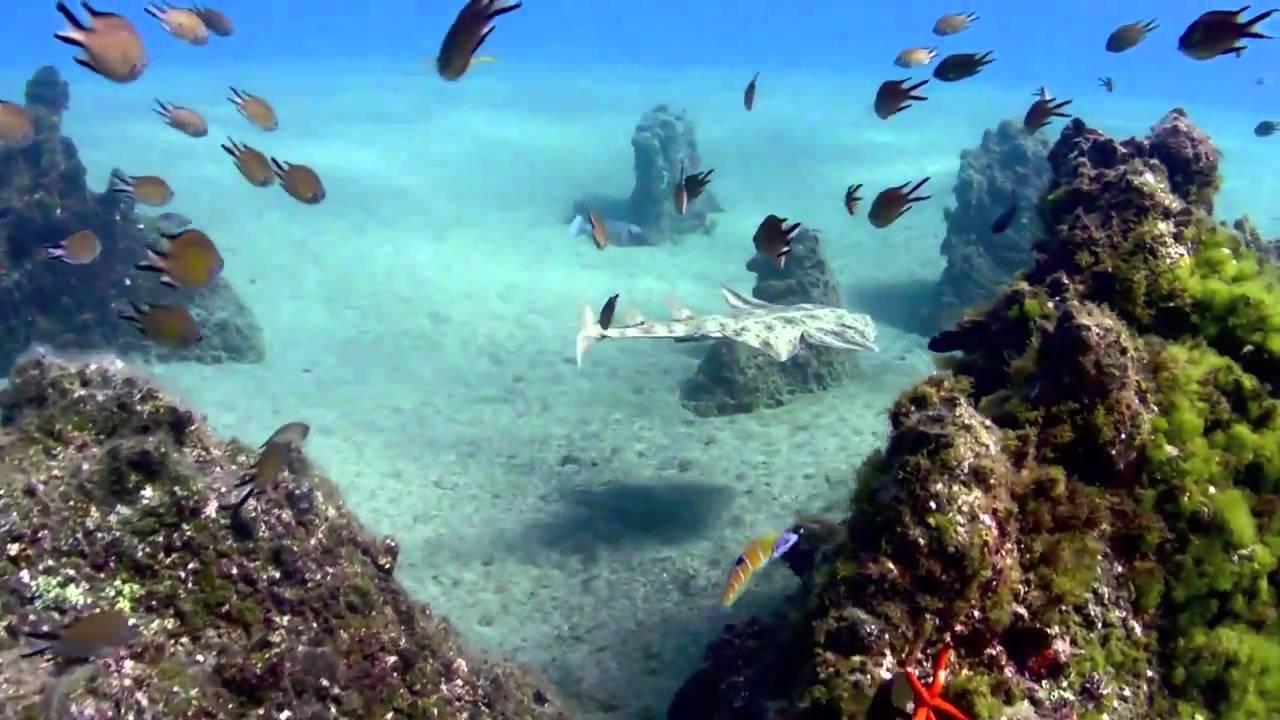 scufundari in Insulele Canare