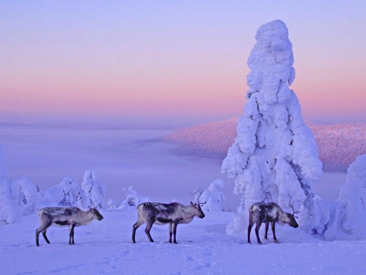 Laponia, Finlanda