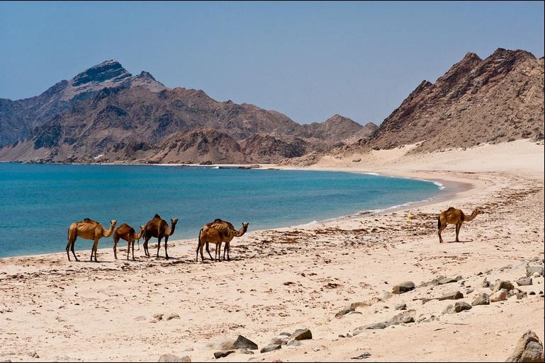 Oman, Emiratele Arabe Unite