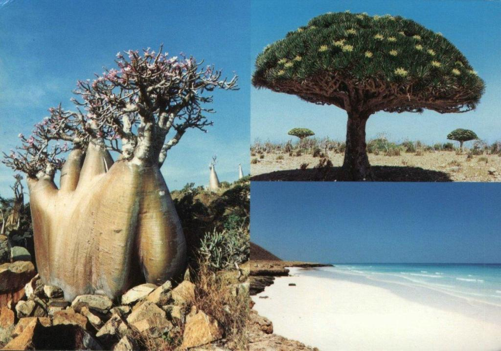 Insula Socotra, cele mai stranii locuri de pe planeta