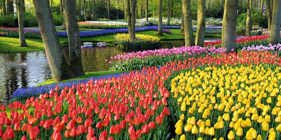 Keukenhof, Amsterdam, top locuri de vizitat in martie