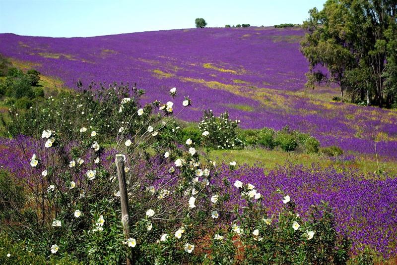primavara in Algarve, destinatii primavara Europa