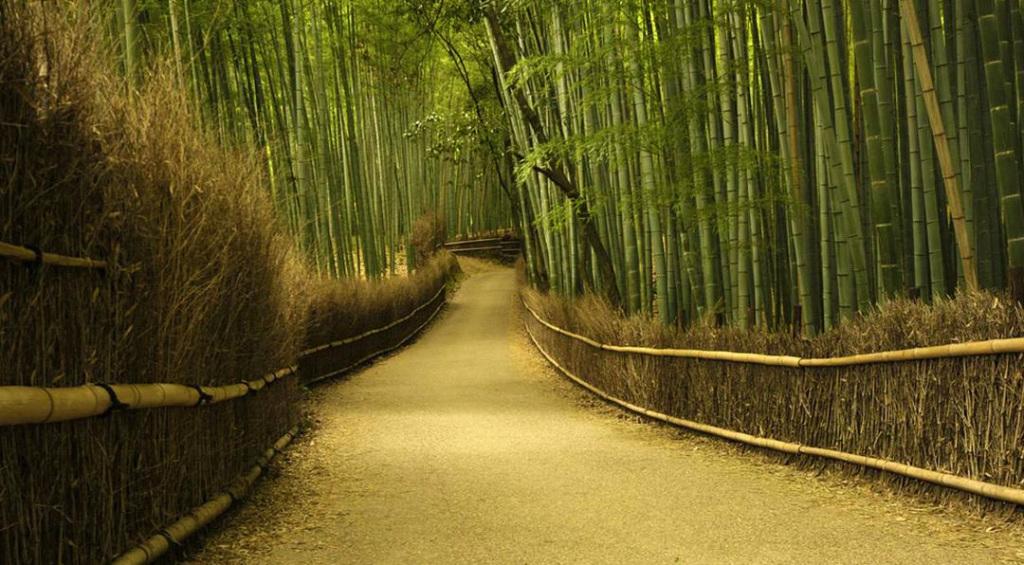 padure de bambus in Japonia