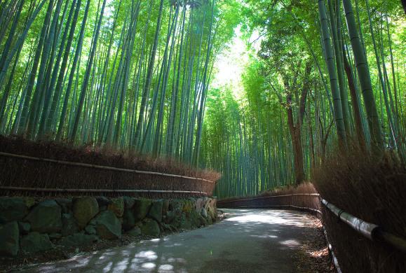 Viziteaza padurea de bambus din Sanago, Japonia!