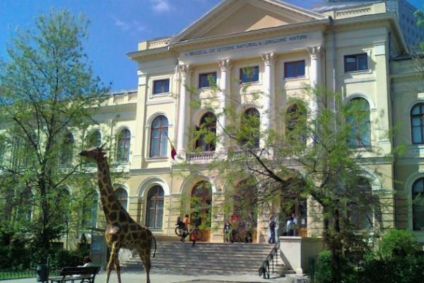 muzeul antipa bucuresti
