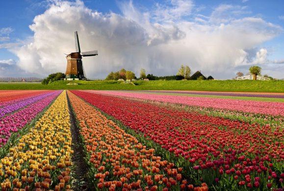 Festivaluri de Lalele din Olanda