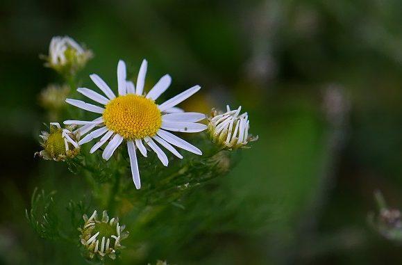 5 plante cu rol terapeutic din diverse zone ale lumii