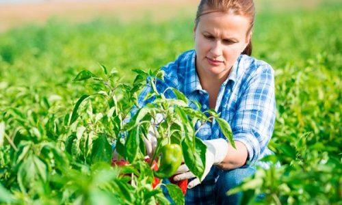 idei de afaceri in agricultura