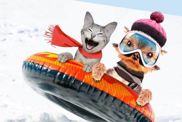 Cum sa ai grija de animalul tau de companie pe timp de iarna