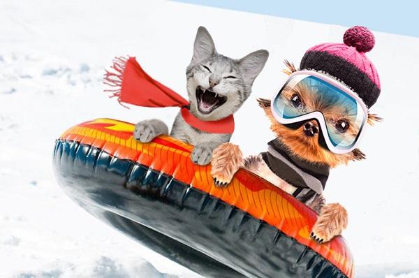 iarna pentru animalele de companie